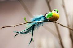 Bird decor at the 2013 Cape HOMEMAKERS Expo