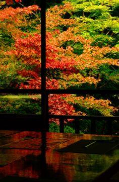 Ruriko-in, Komyo-ji temple, Kyoto, Japan 瑠璃光院 京都 Japan Nature, Wonderful Places, Beautiful Places, Places Around The World, Around The Worlds, Japan Garden, Japanese Landscape, Kyoto Japan, Japan Japan