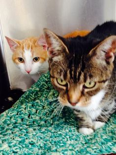 George & Mildred are around 2 years old & came to us via social services because their family could not care for them. They would love a home together.  Sept 2014
