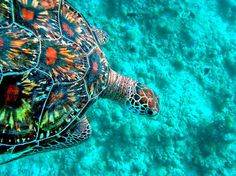 Turtle--amazing colors / I would buy a house down here if I could and spend the rest of the days in depths of the sea