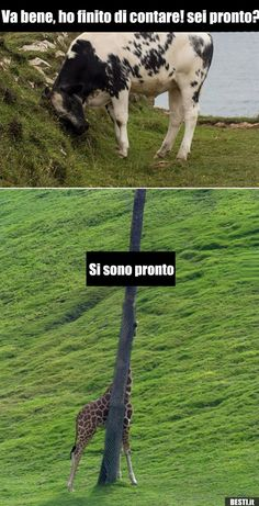 Miniature Breeds Of Cattle That Are Perfect For Small Farms Miniature Cow Breeds, Miniature Cattle, Italian Memes, Black Butler, Funny Moments, Make Me Happy, Farm Animals, Disneyland, Haha