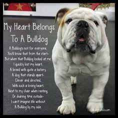 Like and share if your heart belongs to a Bull Dog #barkingmad