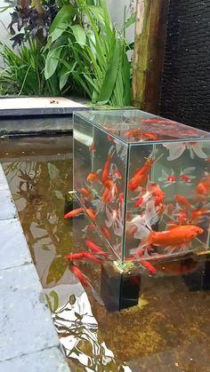 Rio Maryono 🎭 on TikTok Fish Ponds Backyard, Fish Pool, Koi Fish Pond, Outdoor Ponds, Aquarium Garden, Aquarium Landscape, Fish Tower, Pond Construction, Fish Pond Gardens