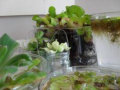The Old and the Beautiful.  Wat je allemaal al niet kan doen met waterplantjes voor een zomers gevoel.