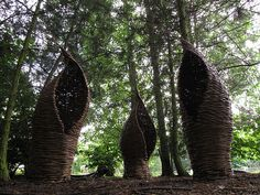willow cocoons