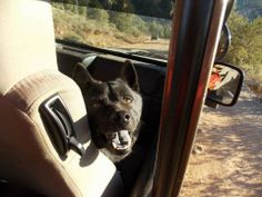 """""""This is Boomer Marks having a BLAST on a jeep adventure while staying at El Portal Sedona! He would love to go back!"""" #ElPortalSedona #SedonaGetaway #petphotocontest"""