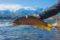 Snake River Cutty