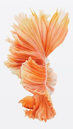 iphone 6s fish pink wallpaper ios9