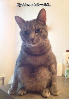15 hilarious photos of cats sitting awkwardly