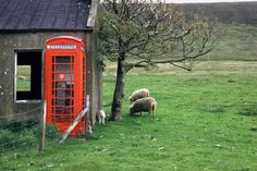 Picture by Raymond Wardenaer. Old farm house and telephone booth, Scotland