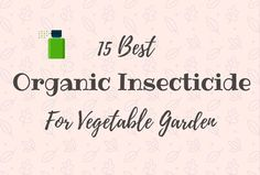Organic Vegetable Gardening Here are my 15 best organic insecticide for vegetable garden which I'm recommending for all to try out. - Here are my 15 best organic insecticide for vegetable garden which I'm recommending for all to try out. Winter Vegetables, Organic Vegetables, Growing Vegetables, Organic Gardening, Gardening Tips, Organic Compost, Vegetable Gardening, Container Gardening, Organic Insecticide