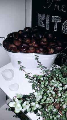 Chestnut decoration in kitchen.