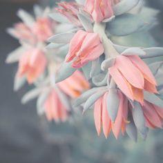 Delicate Cactus Photo 4x4 Botanical Print Fine Art Photography Light Teal Grey Pink Peach Pastel Shabby Chic Home Decor Flower Art