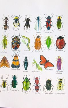 Bug a Bet!  Watercolor print
