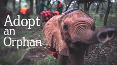 You MUST see this BEAUTIFUL Video!  Adopt an orphan elephant and support their rehabilitation— so that one day, they may return back to the wild and make their dreams come true. https://vimeo.com/111991308