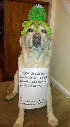 hahaha best dog shaming ever!