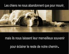 Les chiens ne nous abandonnent que pour mourir mais ils nous laissent leur merveilleux souvenir pour éclairer le reste de notre chemins. Animals And Pets, Cute Animals, Animal Protection, Vegan Animals, Horoscope Signs, Love Pet, Pet Memorials, Westies, Hercules