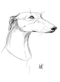 Greyhound by ~Annabola on deviantART