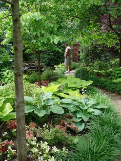 Shaded garden path surrounded by  Dogwoods,Hostas, Caladiums , Begonias and Lirope etc...