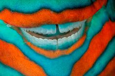 Parrot Fish Teeth by David Doubilet. I love their teeth and to hear them eat the coral underwater...