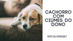 c3ed7137f34 Cachorros que tem