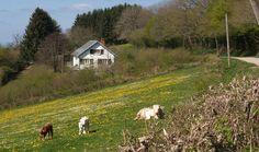 Bourgogne  Natuurhuisje 25363 - vakantiehuis in Les Brenets