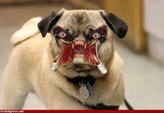 Kết quả hình ảnh cho Funny Dogs