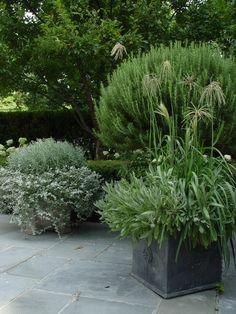 Ornamental Tree Room plant rare Seeds Seeds Balcony Patio Pot Rosewood