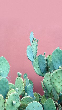 Ideas Cactus Wallpaper Iphone Backgrounds Art Prints For 2019 Garden Wallpaper, Plant Wallpaper, New Wallpaper, Flower Wallpaper, Nature Wallpaper, Pattern Wallpaper, Wallpaper Backgrounds, Trendy Wallpaper, Iphone Backgrounds