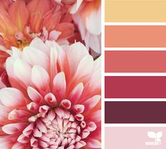 Dahlia Brights from Design Seeds. Gorgeous scrapbook layout palette for a girl, or a glittered floral card. Colour Pallette, Color Palate, Colour Schemes, Color Combos, Color Patterns, Design Seeds, Couleur Feng Shui, Color Concept, Boutique Deco