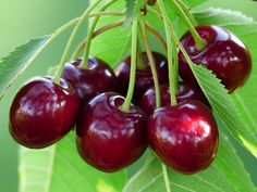 Cherry, Sweet Cherry, Rouge, Fruits
