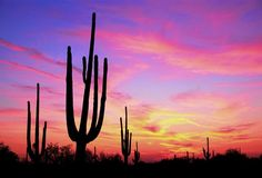 Phoenix, Arizona was extremely hot, but the sunsets were the most beautiful sunsets I have ever seen!