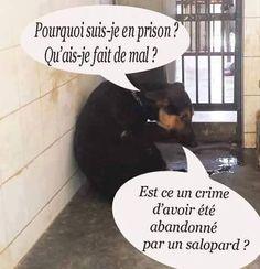 dudu (@FranckDuris) | Twitter
