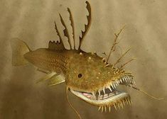 The lurkfish is a large, dangerous, electric chondrostean from the Bengal Swamp, in 100 million. Alien Concept, Concept Art, Beast Creature, Spinosaurus, Alien Art, Creature Concept, Sea Monsters, Fantasy Creatures, Mythical Creatures