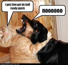 Image result for CAT AND DOG FUN