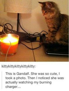 Immagine di cat, funny, and kitten