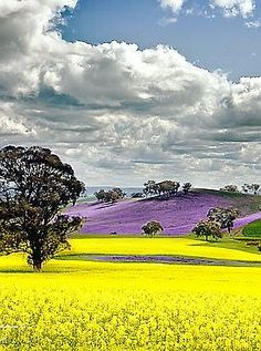 Colors in nature ✯ Canola Field, Canada Beautiful World, Beautiful Places, Beautiful Pictures, Canola Field, Field Of Dreams, Belleza Natural, Canada Travel, Amazing Nature, Rocky Mountains