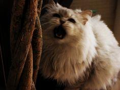 my cat #rawr #cat #kitty