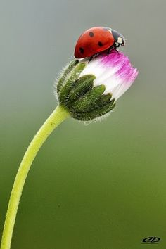 Lady bug lady bug Fly away home. Beautiful Bugs, Beautiful World, Beautiful Flowers, Beautiful Butterflies, Beautiful Creatures, Animals Beautiful, Cute Animals, A Bug's Life, Bugs And Insects