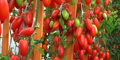 Garden Plants, Vegetables, Stuffed Peppers, Food, Ketchup, Gardening, Diet, Compost, Plants