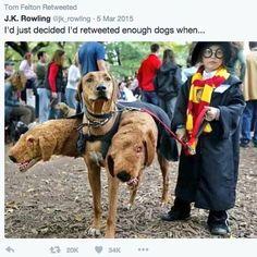 Best Halloween Costumes Ever, Pet Costumes, Cool Costumes, Costume Ideas, Animal Costumes, Puppy Costume, Spooky Costumes, Children Costumes, Creative Costumes
