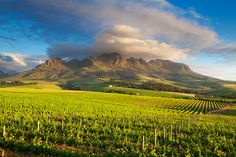 """The Helderberg Mountain - when the nose of the """"head lying down"""" is in the clouds....it is a tell tale sign that rain is on its way (especially when the northeastern wind starts blowing).... Helderberg (Strand / Somerset West Gordons Bay - 40 minutes from Cape Town central."""