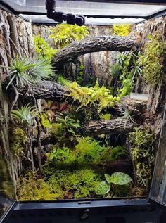 The static leaf tailed gecko vivarium Terrariums Gecko, Lizard Terrarium, Terrarium Plants, Tree Frog Terrarium, Terrarium Tank, Lizard Habitat, Reptile Habitat, Reptile Room, Reptile Cage