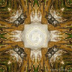 Square shape abstract photo with iguana theme