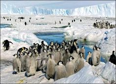 South Pole Animals | ... the South Pole. It is the coldest, windiest and driest continent