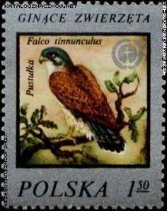 znaczki pocztowe ze zwierzętami - Szukaj w Google Wildlife Protection, Kestrel, Vintage Stamps, Animal Kingdom, Around The Worlds, Birds, Painting, Animals, Polish