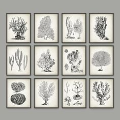 Vintage Coral Wall Art Set Of 12  Marine Wall Art by QuantumPrints