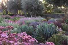 The dry gardens at Lambley are planted in large swaths of complementary colors and textures