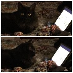 Lucy occasionally enjoys movie night aka bird and squirrel videos on the iPad. http://ift.tt/2AZpuUF