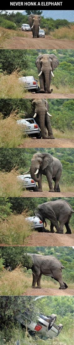 Pictures of the day, 65 pics. Never Honk A Elephant